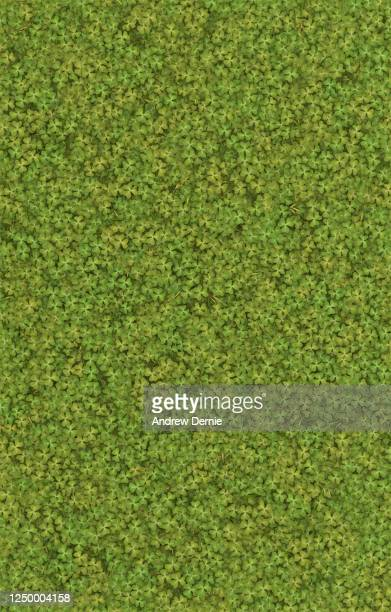 clover viewed from above 3d render - andrew dernie stock pictures, royalty-free photos & images