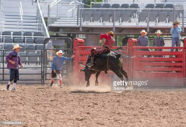 clown working a bull at the rodeo - spanish fork utah stock pictures, royalty-free photos & images