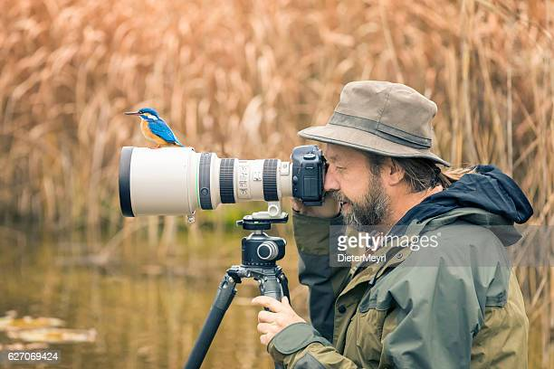 clumsy nature photographer dont find the kingfisher on the len - photographer stock photos and pictures