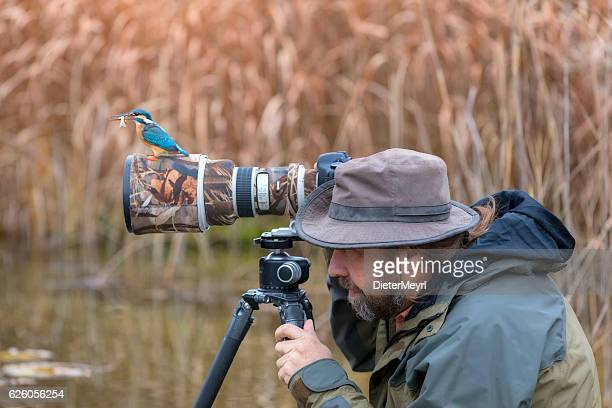 clumsy nature photographer dont find the kingfisher on the lens - bird stock photos and pictures