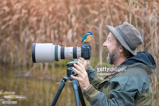 clumsy nature photographer with kingfisher on the camera - kingfisher stock pictures, royalty-free photos & images