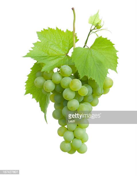 cluster of green grapes on a plain white background - druif stockfoto's en -beelden
