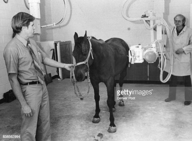 Clyde Baker right hospital Xray technician Xrays a blind horse held by Dr Tony Knight Xray equipment which cost more than $1 25 is supposed to have...