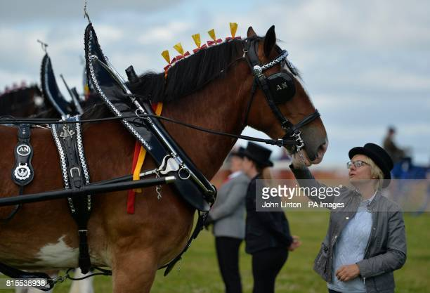 A Clydesdale during a show at the Heavy Horse Show at the National Museum of Rural Life in east Kilbride