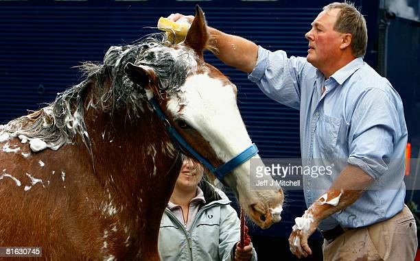 A clydesdale horse is prepared to be shown at the Royal Highland Show June 19 2008 in Edinburgh Scotland The event is the biggest in the Scottish...