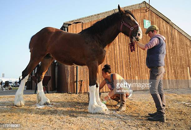 Clydesdale horse is washed before it is shown on the first day of the Great Yorkshire Show on July 9 2013 in Harrogate England The Great Yorkshire...