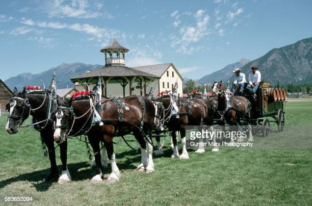 Clydesdale Wagon Horses