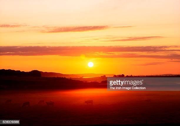 Co Cork, Ireland; Sunrise near Lisheen