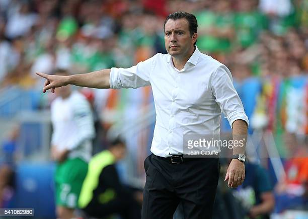 Coach of Belgium Marc Wilmots gestures during the UEFA EURO 2016 Group E match between Belgium and Republic of Ireland at Stade Matmut Atlantique on...