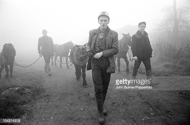 Coal miners with their pit ponies in Waldridge County Durham circa 1963