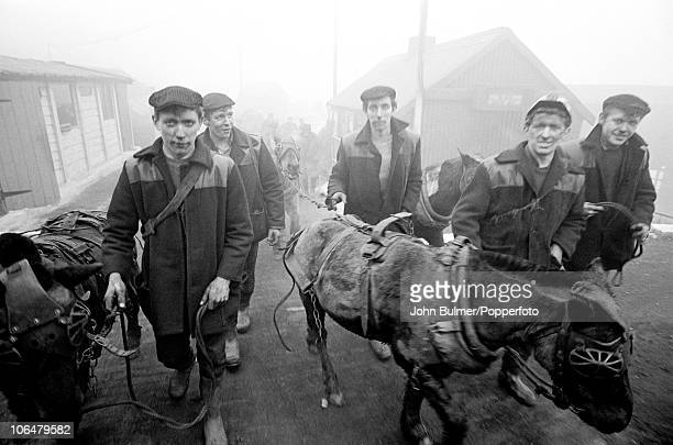 Coal miners with pit ponies at Waldridge drift mine in County Durham England in 1965