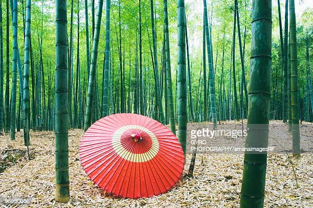 Coarse oilpaper umbrella in bamboo forest, Muko city, Kyoto prefecture, Japan