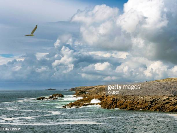 coast at cap fréhel on the atlantic ocean - wilderness area stock pictures, royalty-free photos & images