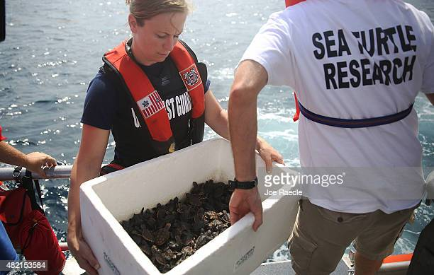 S Coast Guard LTJG Jessica Shafer helps David Anderson a Marine Turtle Specialist carry a box of some of the more than 570 baby sea turtles including...