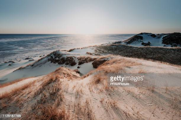 coast landscape island of amrum - north sea stock pictures, royalty-free photos & images