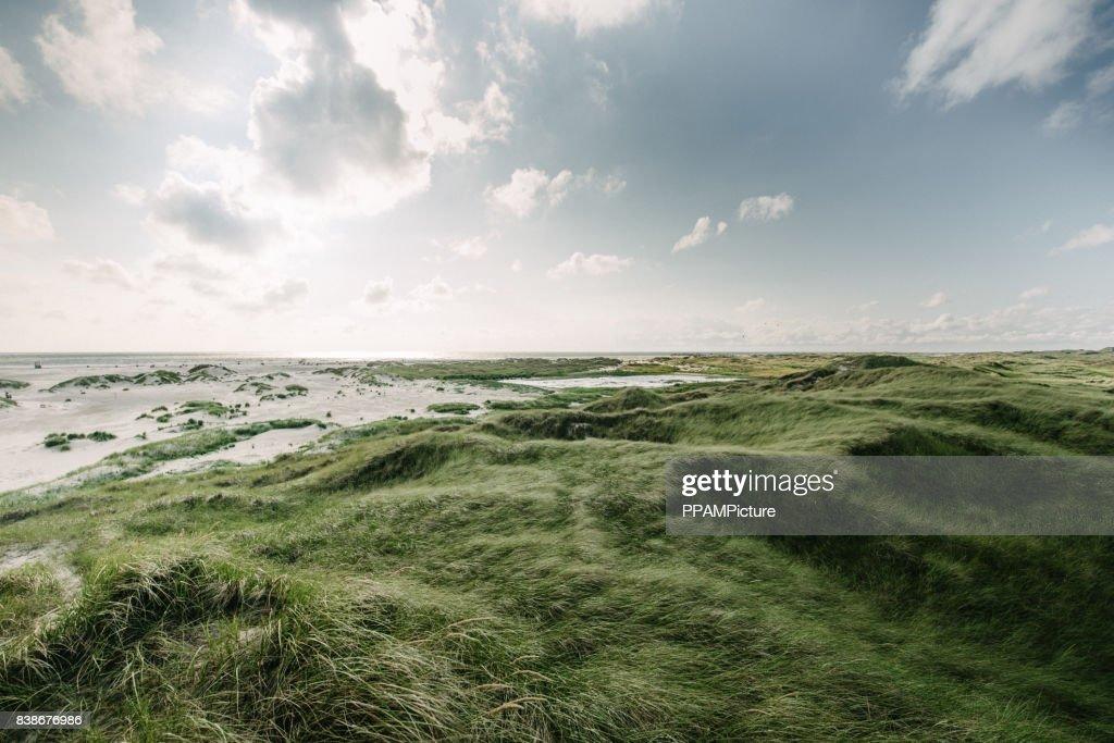 Küste Landschaft Insel Amrum : Stock-Foto