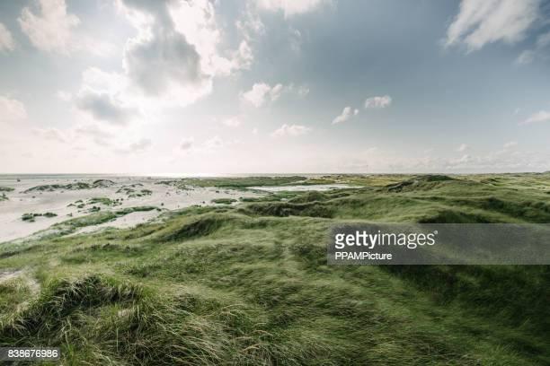 Coast Landscape Island of Amrum