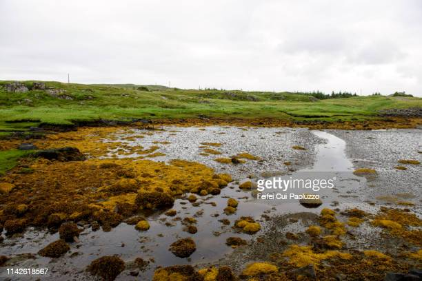 coast of kirkibost, isle of lewis, scotland - hebriden inselgruppe stock-fotos und bilder