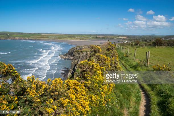 coast path at newport, pembrokeshire coast national park, wales - newport wales photos stock pictures, royalty-free photos & images