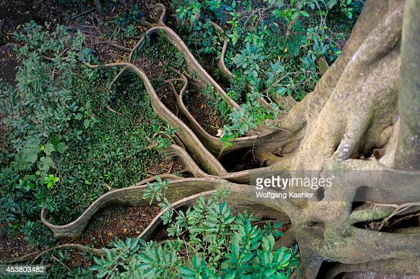 Coasta Rica Rincon De La Vieja Tropical Rainforest Buttress Roots