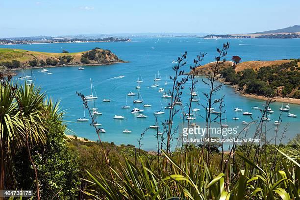 Coastal bay Waiheke Island, Auckland, New Zealand