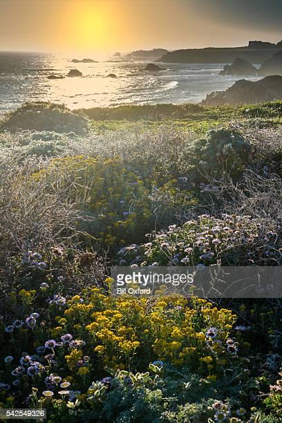 coastal california - carmel california stock photos and pictures