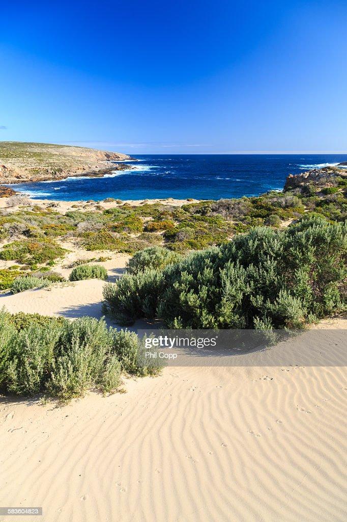 Coastal dunes and beach : Stock Photo