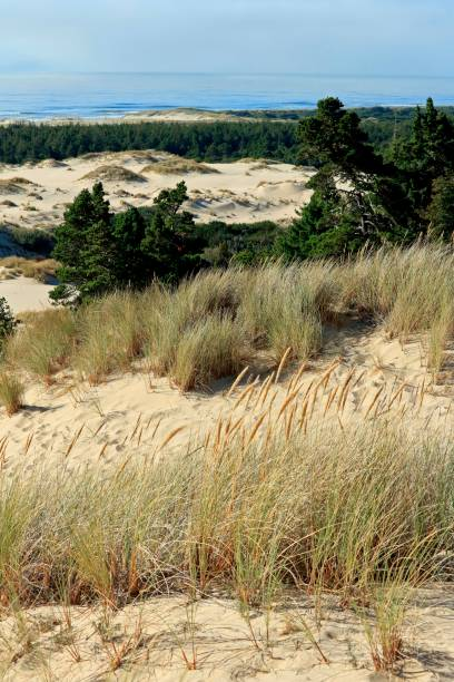 Coastal dunes in the Oregon Dunes National Recreation Area