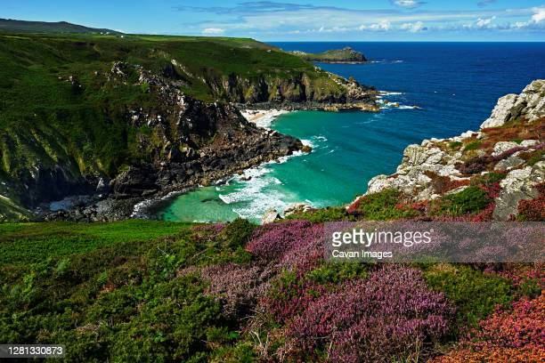 coastal landscape, cliff edge, beautiful gorse - st. ives cornwall stock pictures, royalty-free photos & images
