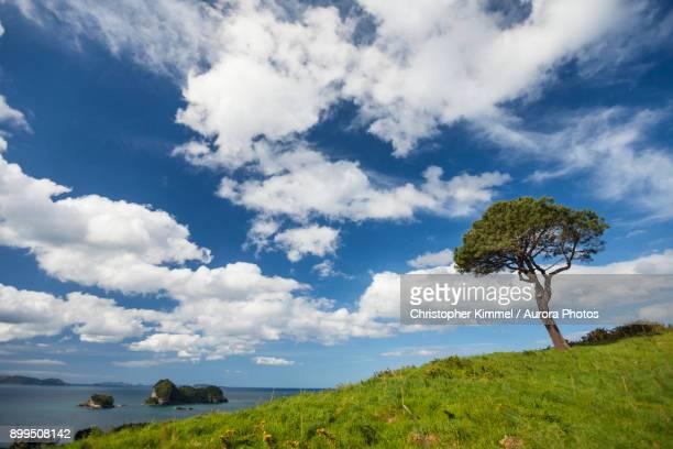 Coastal Landscape, Hahei, New Zealand.