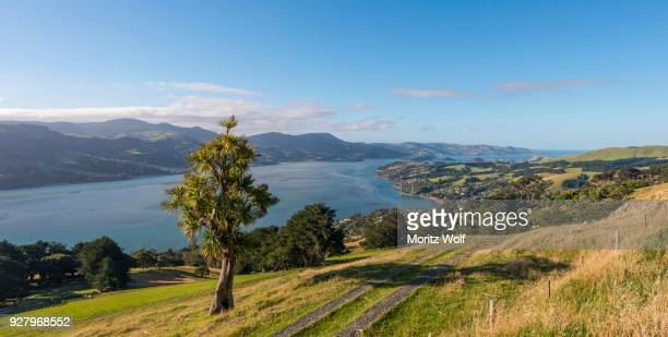 coastal landscape, otago harbor, otago, south island, new zealand - otago region stock pictures, royalty-free photos & images