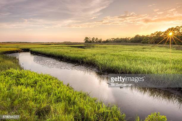 coastal marsh with water, afternoon sun - sumpmark bildbanksfoton och bilder