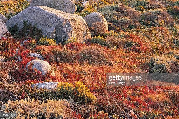 coastal meadows, big sur coast, ca - big meadows stock pictures, royalty-free photos & images
