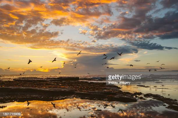 coastal ocean scene with dramatic morning sunrise and sea birds - idyllic stock pictures, royalty-free photos & images
