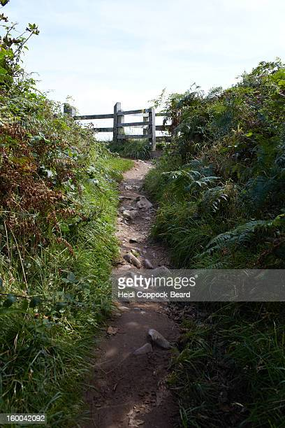 coastal path - heidi coppock beard stock pictures, royalty-free photos & images