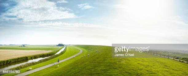 Coastal plains of Netherlands panoramic with grazing sheep and cyclist