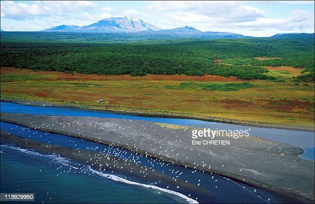 Coastal Reserve Of Kronotski Kamtchatka In Russia In 1999The Ustiyevaya cabin in the heart of a habitat where the brown bears thrive an estuary where...