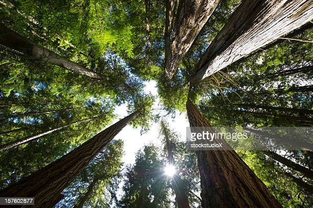 coastal temperate rain forest - looking up stock pictures, royalty-free photos & images