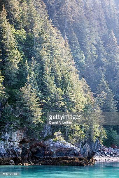 coastal temperate rainforest in alaska - golfo do alasca imagens e fotografias de stock