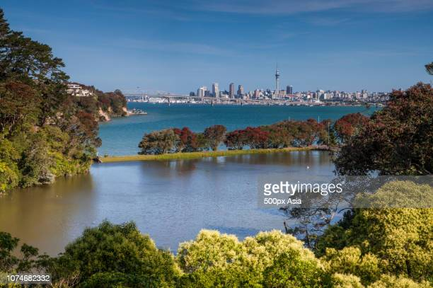 coastal trees with waterfront city skyline in background, new zealand - image stock pictures, royalty-free photos & images
