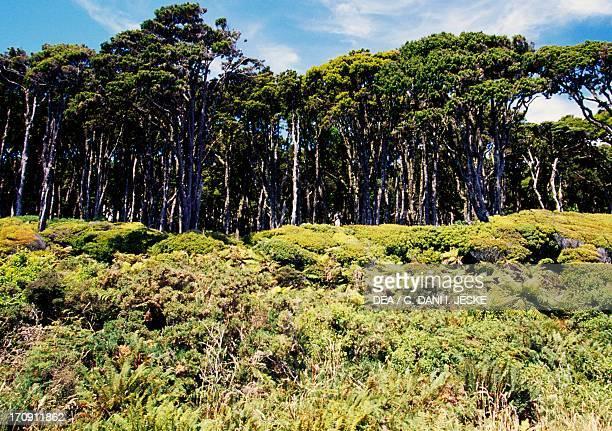 Coastal vegetation Haast Westland National Park Westland National Park West Coast South Island New Zealand