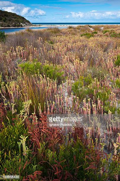 Coastal vegetation.