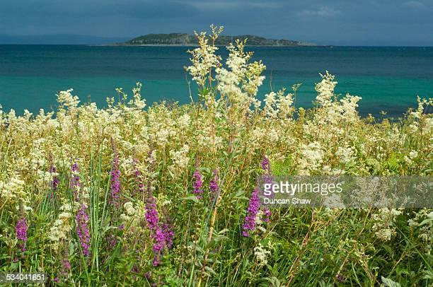 Coastal wildflower meadow