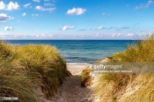 coastline at western pomerania lagoon area national park, mecklenburg-western pomerania, germany - strand stock-fotos und bilder