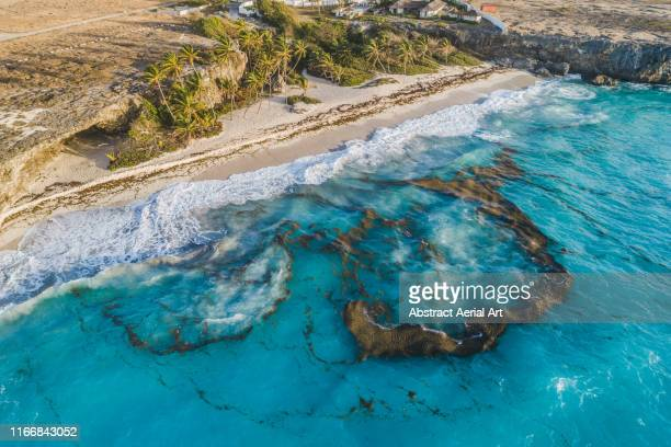 coastline views photographed by drone, barbados - 藻 ストックフォトと画像