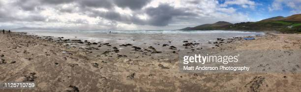 coasts of ireland inch beach pano alternative - big sur stock pictures, royalty-free photos & images