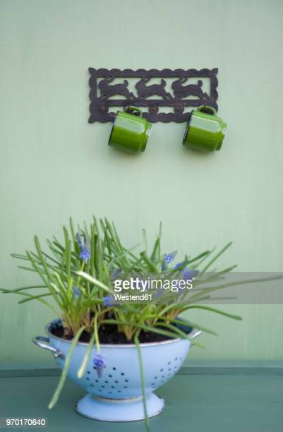 coat rack with two cups - colander stock photos and pictures