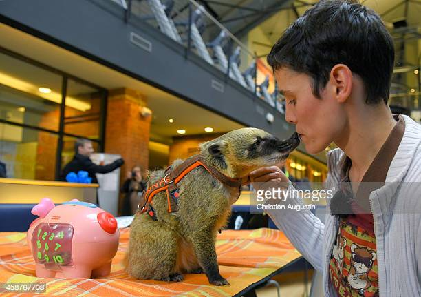 Coati 'Sunny' and owner Nicolle Mueller set a world record for putting the most coins in a money box by a coati in one minute Record at at Holmes...
