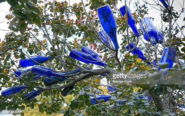 Cobalt blue glass bottles 'grow' in a tree in the quirky West Asheville neighborhood as viewed on October 22 2016 in Asheville North Carolina Named...