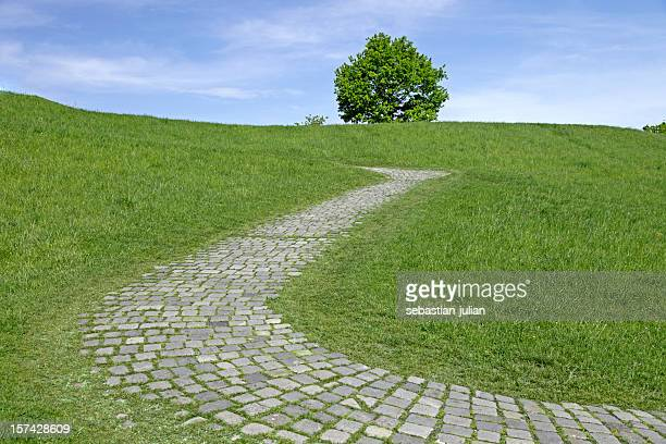 cobbled stone path with lonely tree on a slope